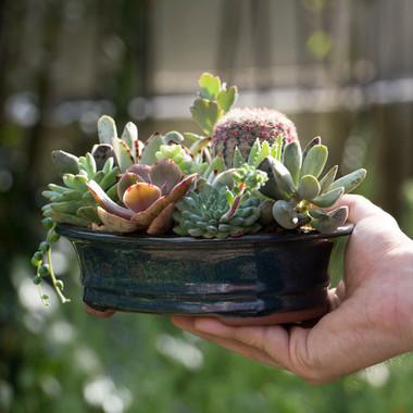 Succulent arrangement in Bonsai Container