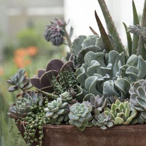 Mounded succulent arrangement | Peace of Plant