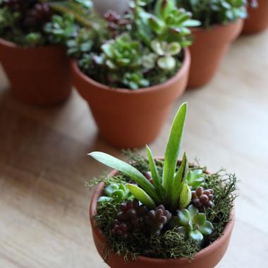 miniature succulent arrangement | peace of plant