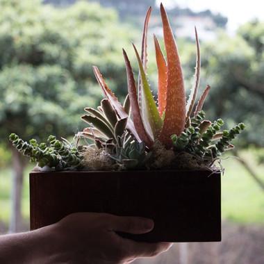 Succulent terrarium in wood box | Peace of Plant