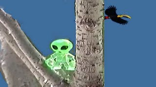 Aliens Episode 9: A Bungle in the Jungle