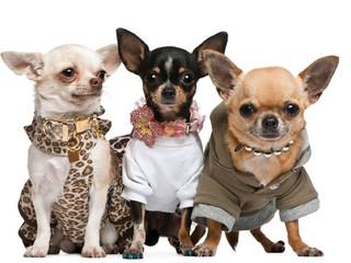 Ropa para perros ¿si o no?