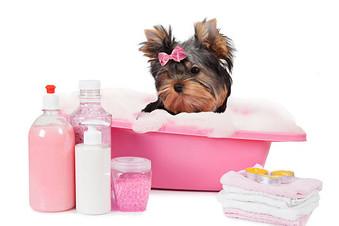 Primer Baño de Nuestro Cachorro