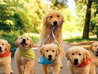 La importancia del paseo diario de nuestra mascota