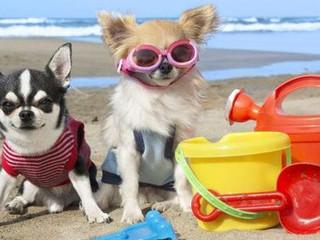 Puesta a punto de nuestros perros trás el verano