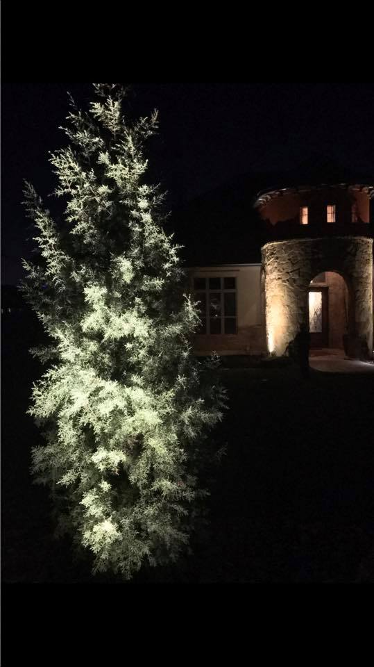Landscape Lighting JXC Landcaping Austin, Texas (3)