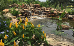 Koi Pond JXC Landscaping