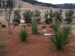 JXC Landscaping Renovation Rough Hollow, Lakeway TX (16)
