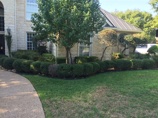 Before Pics JXC Landscaping (9)