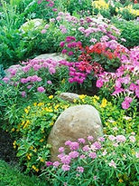 Native Plant Landscaping in Austin TX