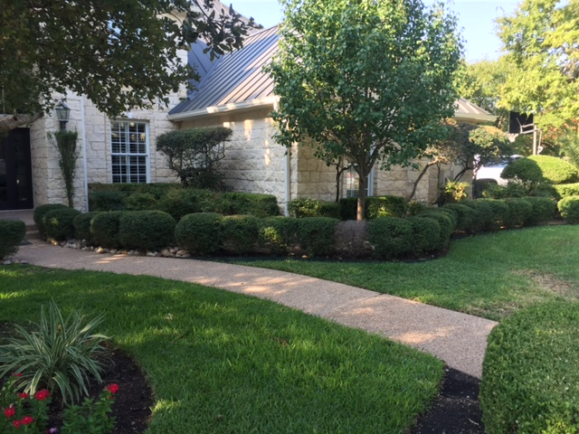 Before Pics JXC Landscaping (7)