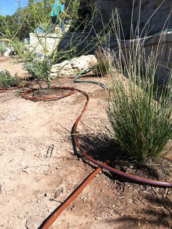 JXC Landscaping Rough Hollow  Drip Irrigation Install 10.26.2014 (48)