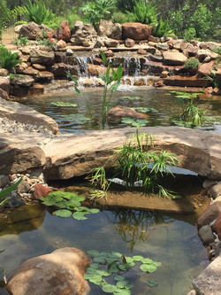 JXC Landscaping Koi Pond Installation Bella Montagna Lakeway TX (4).jpg