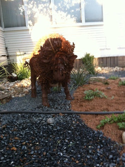 JXC Landscaping install and rock work (21).jpg