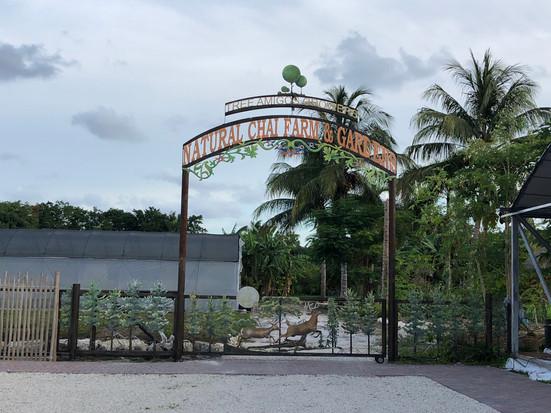 Natural Chai Farms & Gardens Enterance