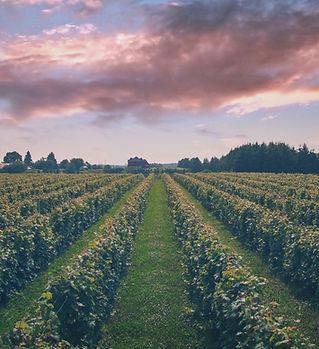domaine-gelinas-vignes-grands-champs.jpg
