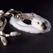 RabbitStudio.jpg