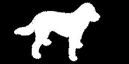 chien-blanc-transparent.png