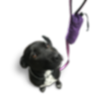 PoochPouch.png
