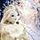Thumbnail: Princess Snow and Light