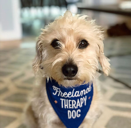 therapy%2520dog_edited_edited.jpg