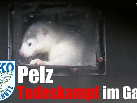 Aufnahmen aus Pelzfarmen in Polen:
