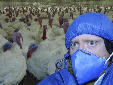 Undercover für den Tierschutz