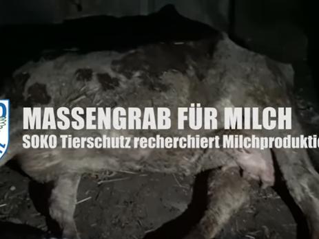 Massengrab für Milch