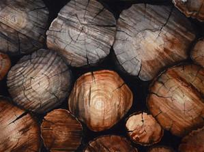Wood Pile I
