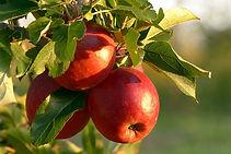 fruit-2905849_1920.jpg