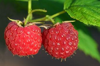 raspberry-3454504_1920.jpg