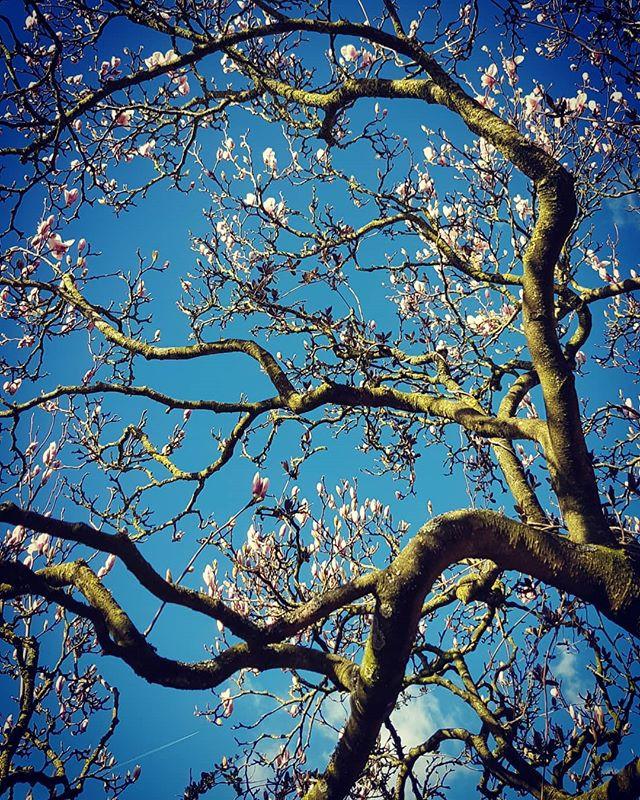#magnoliasareawesome #springday #goodsta