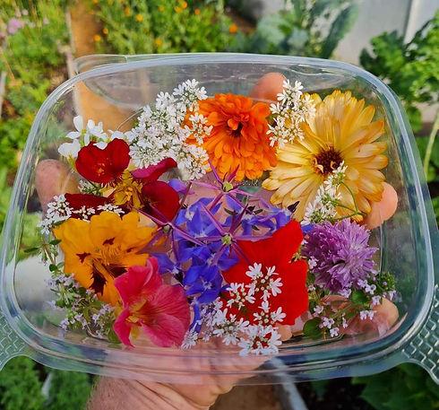 EDIBLE FLOWERS 2.jpg