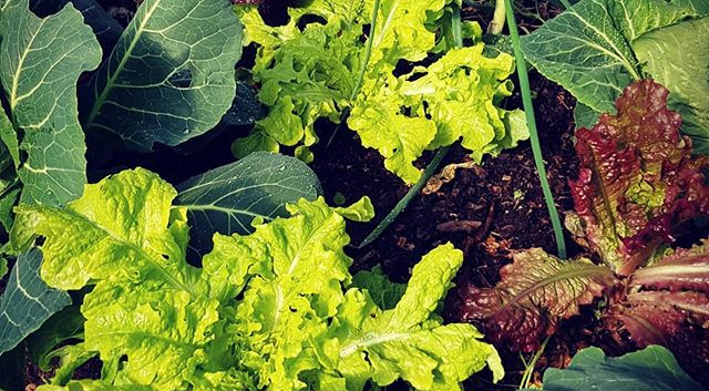 #polyculture and #sucession of #colour i