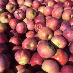 May 1st, Apple Crunch, Online A-Sweet-A-Week Class
