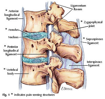 back pain, musculoskeletal, neck pain, disc, physiotherapy, franklin, andrea, physio@novena, novena