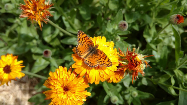 pollinator%20in%20action_edited.jpg
