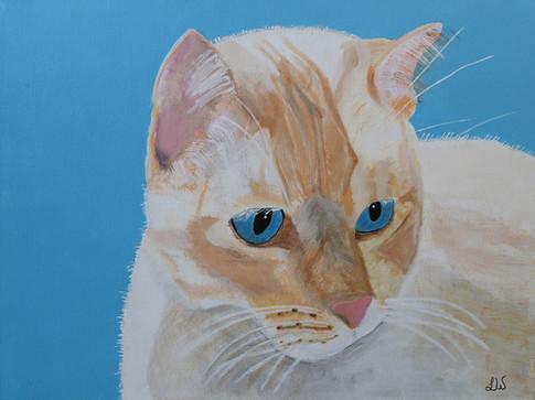 Gato by LeAnn Wilson