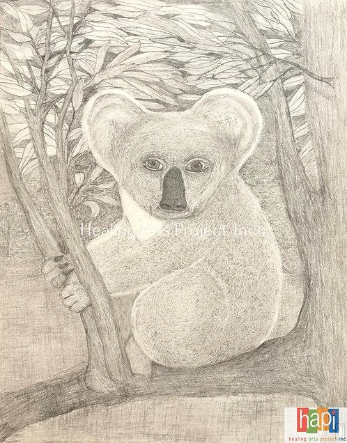 Wise Koala