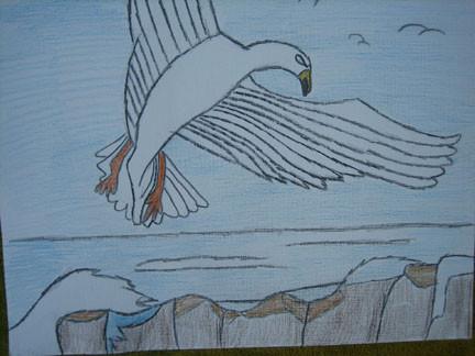 Sea Gull by Ron Bass