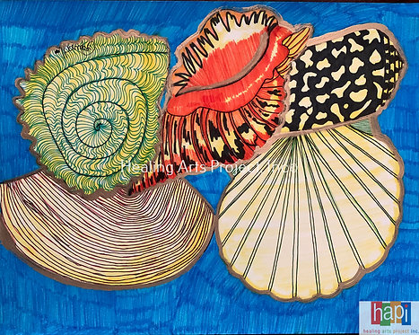 Shells of the Sea