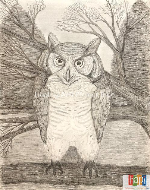Quizical Owl