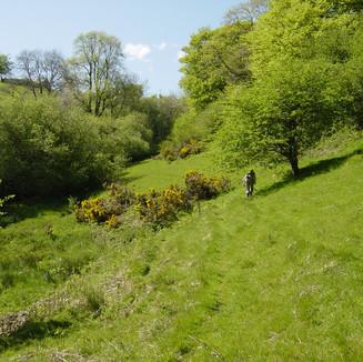 Lovely walks on site