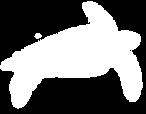 Dermochelys-coriacea-(Tortuga-Laúd-o-si