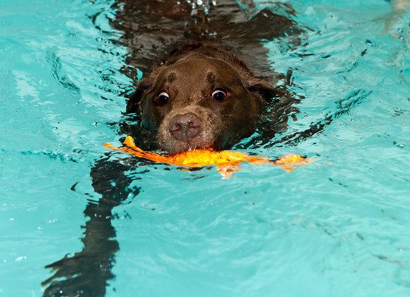 Non Assisted Short Swim