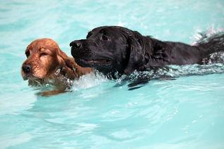 swimming dogs.jpg