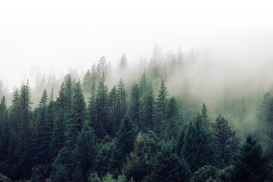 nature-forest-trees-fog-4827-Rudj2.png