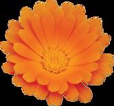 63P-Apiceuticals-calendula-leafs-ultra-n