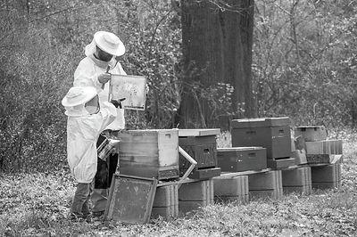 165-Organic-Ethical-Sustainable-beekeepi