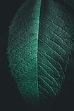 green-leaf-2225648.jpg